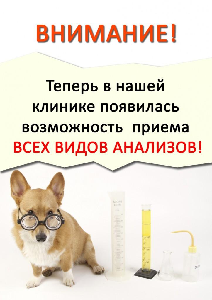 Ветеринарная клиника в городе юбилейный